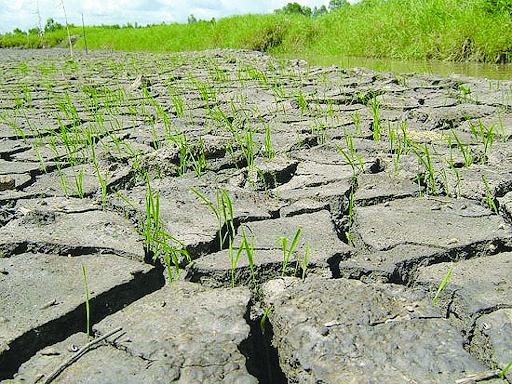 Hiện tượng thiếu nước và hạn hán do BĐKH sẽ dẫn tới hoang mạc hóa.