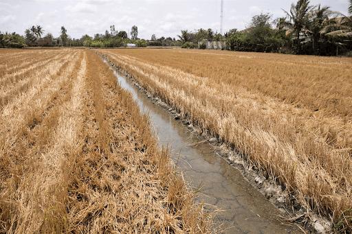 Biến đổi khí hậu tàn phá mùa màng nghiêm trọng