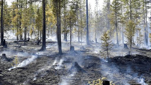 Hệ sinh thái rừng bị tác động mạnh mẽ của BĐKH